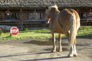 horse-at-stop-sign